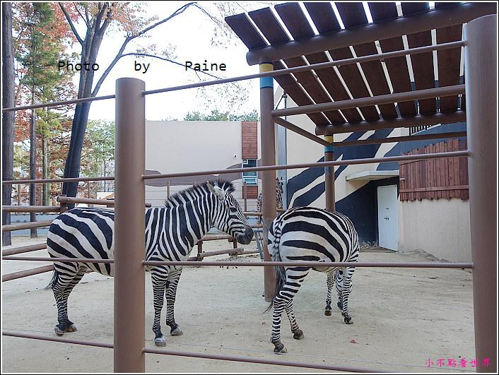 釜山動物園 (15).JPG