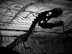 Shadows of the Past (ludderz) Tags: history silhouette museum dinosaur natural dramatic bones