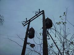 Oncor 12.47kV - Dallas, TX (Astro Powerlines) Tags: electric cutout streetlight transformer pole powerlines transformers powerline poles electrical utilitypole dallastx lightningarrester oncor