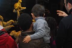 Alla mostra QUANDO IL CIBO  SAPERE (VIS - Volontariato Internazionale per lo Sviluppo) Tags: mostra per di museo congo albania terra ong ngo cooperation palestina nutrition cooperazione civico zoologia genitori passaporto educazione adozioni biodiversit coltivare nutriora