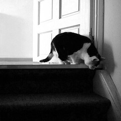 Poek b/w (milov) Tags: door bw cats home animals stairs phonecam square steps cropped tweetme fbme poek instagram samsunggalaxys3