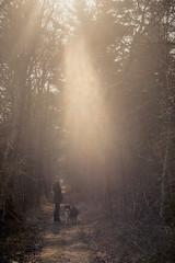 Rumo, Chrissi, Sun (derScheuch) Tags: forest wald chrissi rumo wildenloh carlzeissbiotar