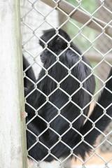 IMG_1921 (jmac33208) Tags: new york animal animals zoo land mills adirondack vails