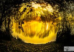 The Magical Lake (Rob Felton) Tags: sun lake sunrise bedford dawn wildlife bedfordshire fisheye felton sunup firstlight dovecote gravelpit willington robertfelton bedfordrivervalleypark dovecotelake
