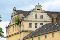 6291 Giebel mit jungen Bäumen in der Dachrinne vom Coswiger Schloss.  Coswig war von 1603 bis 1793 Teil des Fürstentums Anhalt-Zerbst. Das in der Stadt befindliche Schloss wurde 1667–1677 erbaut und diente bis ins 19. Jahrhundert als Witwensitz. Während i (stadt + land) Tags: giebel junge bäumen dachrinne coswiger schloss coswig anhalt landkreis wittenberg sachsenanhalt elbe bilder fotos