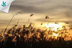 Jangan kurangi pahalamu hari ini, dengan mengeluh, mengupat, menimbun dendam, hingga saat senja hanya kelelahan yang kau rasa~ #senja #sunset #serang #kotaserang #bms #Banten #quote #nature #Indonesia. http://kotaserang.net/1BFtNAa (kotaserang) Tags: ifttt instagram jangan kurangi pahalamu hari ini dengan mengeluh mengupat menimbun dendam hingga saat senja hanya kelelahan yang kau rasa~ sunset serang kotaserang bms banten quote nature indonesia httpkotaserangcom