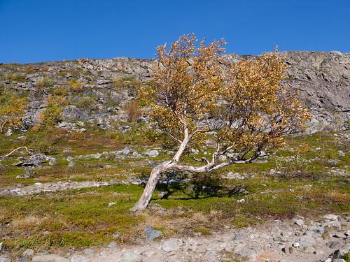 Lappland-092015-20