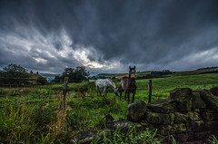 Why the long face (Glen Parry Photography) Tags: glenparryphotography landscape d7000 nikon sigma sigma1020mm todmorden westyorkshire yorkshire