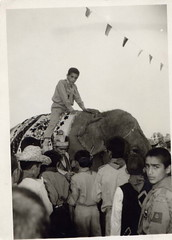riding an elephant in iran (reza fakharpour) Tags: old blackandwhite elephant monochrome vintage freedom iran iranian boyscout iranians  iranbeforetherevolution