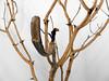 Planos de Madera (José Ramón de Lothlórien) Tags: macro lapiz controlremoto cebolla cebollas piña fruta frutas verduras trebol treboles ramas madera ladrillo ladrillos