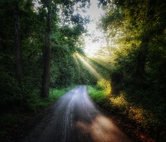 Morning Rays (podolux) Tags: sunlight valleyroad valleyrd maryland md washingtoncounty washingtoncountymd ruralmaryland trees light sony sonya6000 a6000 snapseed postprocessing road morninglight morning