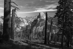 Half Dome (Owen J Carter) Tags: yosemite california usa america landscape anseladams lackandwhite halfdome view beautiful stunning bw mountains granite canon 6d travel traveller travelling
