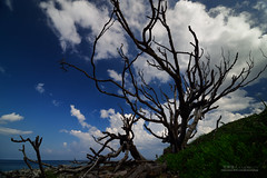 () Tags: taiwan    landscape sea beach    taitung