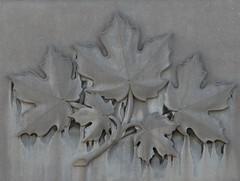 Maple Leaves (Explored) (jmaxtours) Tags: basrelief mapleleaves maple leaves laurasecordbuilding stcatharines stcatharinesontario ontario