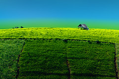 Peace (Fevzi DINTAS) Tags: peace sinle alone lonely house cottage hill nature landscape travel holiday visit tourism adventure asia thailand farm rice field agriculture food colours patterns paza140 nationalgeographic