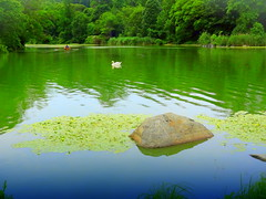 Beautiful Place (dimaruss34) Tags: newyork brooklyn dmitriyfomenko image summer prospectpark reflection