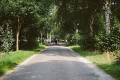 Landleben (Gret B.) Tags: landleben kuh khe strase cow herde bauer land worpswede birken