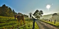 ~~ Paix ~~ (Jolisa { en vacances du 22 au 29 Sept.2016}) Tags: matin morning soleil rais rayons nature paysage contrejour octobre2015 prairie barrires fences elisa cheval horse