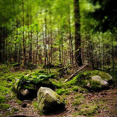 INSTAGRAM 365 Day 251: Forest Moment (tomas_nilsson) Tags: instagram365 sweden lund dalby skrylle forest woods trees boulders moss green calm quiet recharge freshair cellphonephotography lg g4 snapseed postprocessing