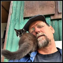Love Me :-) (gill4kleuren - 12 ml views) Tags: world cat kat shunset hair eyes little pet animal collage pussycat pussy poezen poes outdoor mammal indoor people