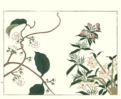 Silver vine, heal-all and Mohls dendrobium orchid (Japanese Flower and Bird Art) Tags: flower silver vine actinidia polygama actinidiaceae healall prunella vulgaris lamiaceae mohls dendrobium orchid orchidaceae hoitsu sakai kiitsu suzuki kimei nakano nihonga woodblock picture book japan japanese art readercollection