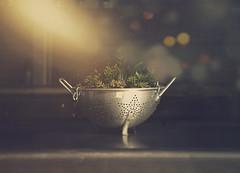 Pot3 (MrJsBelieve) Tags: love grow green light simple lefe fineart conceptual conceptualphotography