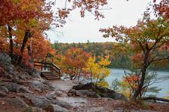 Rainy Autumn Day at Pink Lake : October 22, 2016 (jpeltzer) Tags: ottawa gatineaupark gatineau pinklake fall fallcolours rain