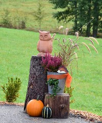 (:Linda:) Tags: germany thuringia village brden bucket owl flowerpot bird pumpkin vegetable treestump