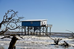 Survived Hurricane Matthew - Little Blue - Hunting Island South Carolina (Meridith112) Tags: cabin huntingisland huntingislandstatepark house building water atlanticocean ocean november 2015 fall autumn nikon nikon2485 nikond610 hurricanematthew hurricanehermine abandoned decay erosion littleblue survivedhurricanematthew survivedhurricanehermine indomitablelady lastcabinstanding onetoughlady majesticlady greatdameofthesouthend lonebeacon lonesoldier survivor
