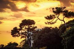 Sunset (thomasmartin12) Tags: larochelle canon tamron light lumiere arbre tree ciel sky cloud nuages orange