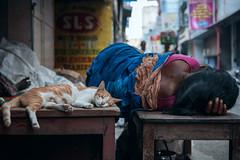 Co-Existence (Vilvesh) Tags: cwc chennaiweekendclickers cwcwalk parryscorner streetphotography cat women life sleeping nikon nikond750 nikon24120 chennai tamilnadu colors india market flowermarket coexistence pet