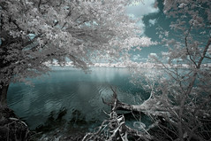 From The Vault (It's my whole damn raison d'etre) Tags: infrared ir blue white trees water chesapeake bay saint michaels maryland md clouds talbot county eastern shore nikon d90 alex erkiletian