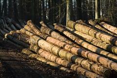 ckuchem-7075 (christine_kuchem) Tags: abholzung baum baumstmme bume einschlag fichten holzeinschlag holzwirtschaft wald waldwirtschaft