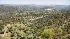 Coitadinha, Barrancos, Portugal (Jim 592) Tags: quinta coitadinha barrancos portugal alentejo holm oak quercus ilex landscape