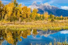 Schwabacher Fall Reflection (Wycpl) Tags: grandtetonnationalpark tetons schwabacher mountains sky fallfolliage
