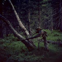 Spirit of the forest (16Tigers) Tags: blackforest ektar100pushed2stopps kodakektar100 schwarzwald todtnau black