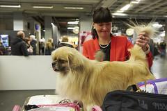 MyDOG 2015 Tibetansk spaniel (Svenska Mässan) Tags: dog dogs grooming hund spaniel dogshow mydog hundar tibetansk svenskamässan hundutställning hundtävling tibetanskspaniel hundmässan sällskapshund västrakennelklubben hundmässa hundevenemang mydog2015