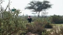 #colorful #photography #nature #hdr #ksa #روضة خريم (photography AbdullahAlSaeed) Tags: nature photography colorful hdr ksa روضة