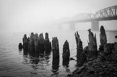 Slip into the Fog (Brian Pemberton) Tags: fog oregon portland blackwhite october eastside willametteriver 2013 fujix100 brianpembertonphotography slipintothefog
