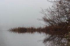 diver lake-2 (mrpmartini) Tags: trees winter lake canada colour reflection nature fog peace bc britishcolumbia calming nanaimo vancouverisland fallcolour