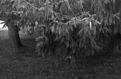 (redmetal35) Tags: film 35mm ilfordhp5 rodinal 2014 pentaxmz5n microtek1800f fa28803556