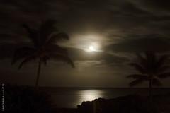 Moonstruck (San Francisco Gal) Tags: cloud moon reflection paradise maui palm tropical