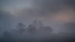 Bäume im Nebel (mkniebes) Tags: morning autumn trees mist nature fog germany landscape nebel gloomy herbst bochum landschaft hollow dunst