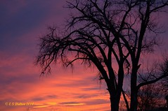 December 6, 2014 - An amazing sunrise in Thornton. (Ed Dalton)