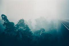 Nightless Night (Louis Dazy) Tags: trees paris film nature fog 35mm foggy bfm tees