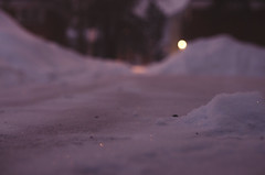 Missed a Spot (flashfix) Tags: winter snow ontario canada nature backyard nikon bokeh path ottawa ground sidewalk hues 40mm mothernature pinkish glisten lowlighting 2015 backyardphotography pilesofsnow lowpointofview d7000 nikond7000 2015inphotos january292015