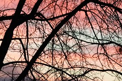image (the_vivid_girl) Tags: trees sunset sky colors beautiful canon rebel zoom branches prairie