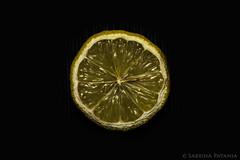 Wheel (Sabrina Patania) Tags: life food sabrina black yellow fruit still lemon giallo alpha frutta ilce a6000 patania