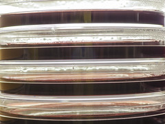 GRN_0221 (David J. Thomas) Tags: media plates dishes gel microbiology agar petriplates eosinemethyleneblueagar