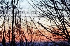 Dans les bois_MG (iMATG) Tags: rose nikon couleurs branches ciel arbres soir fort bois argentique color tons fg20 dgrad guyaux imatg mathieuguyaux